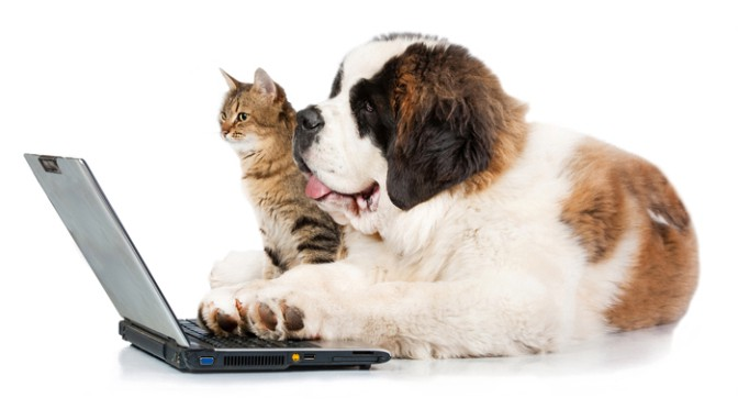 Dog and cat using a laptop.