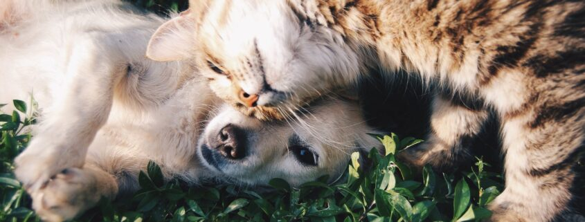 Cat leaning on a dog.